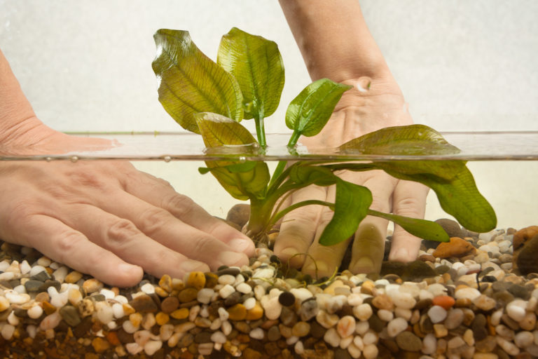 Aquarium Plants - starter guide - how to