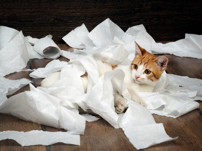 Cat hygiene - no toilet training