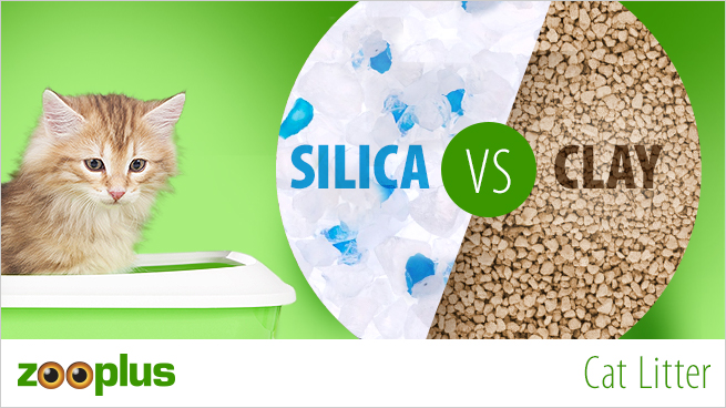 Cat Litter - Clumping or Silica