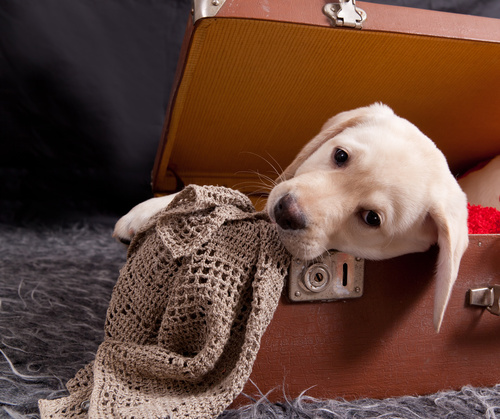 Adopting a puppy from abroad