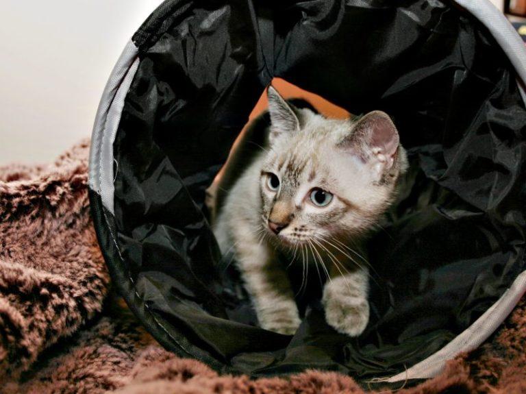 cat agility - cat tunnel