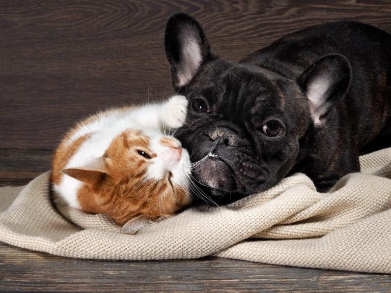 Cat and dog cohabitation
