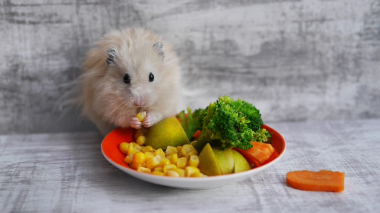 Green Food Small Pet - IE