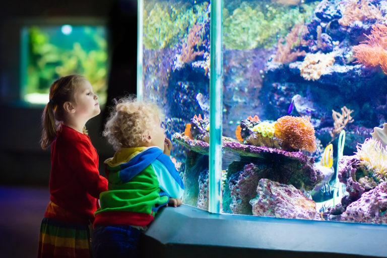 Kids watching fish in tropical aquarium