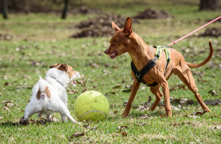 Dog Aggressive - Behavioural Training