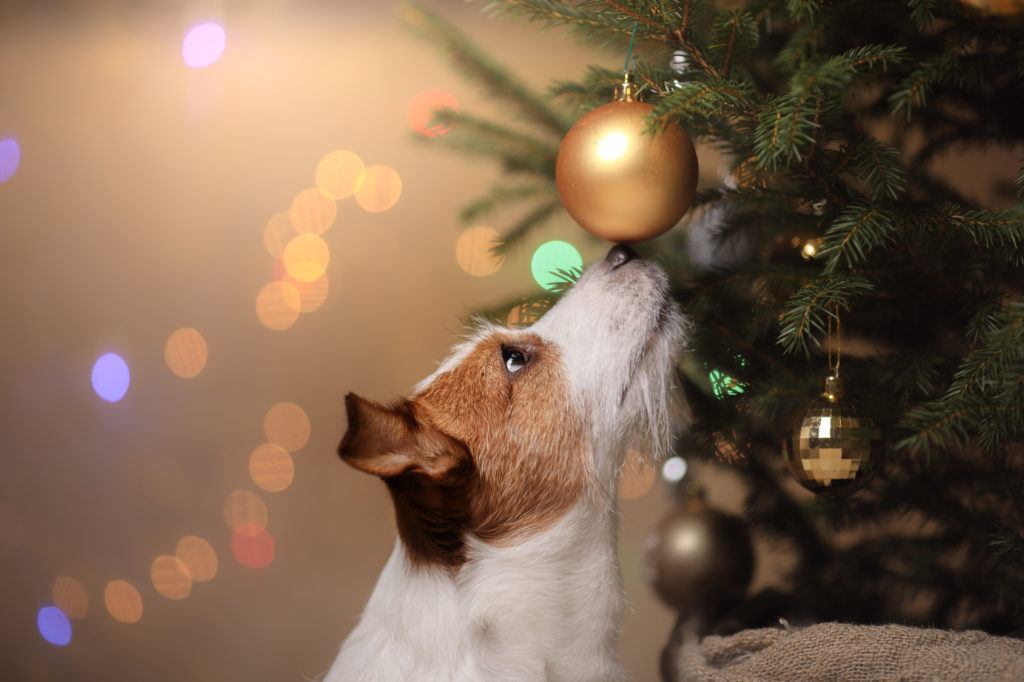 Dangers during Christmas for Dogs
