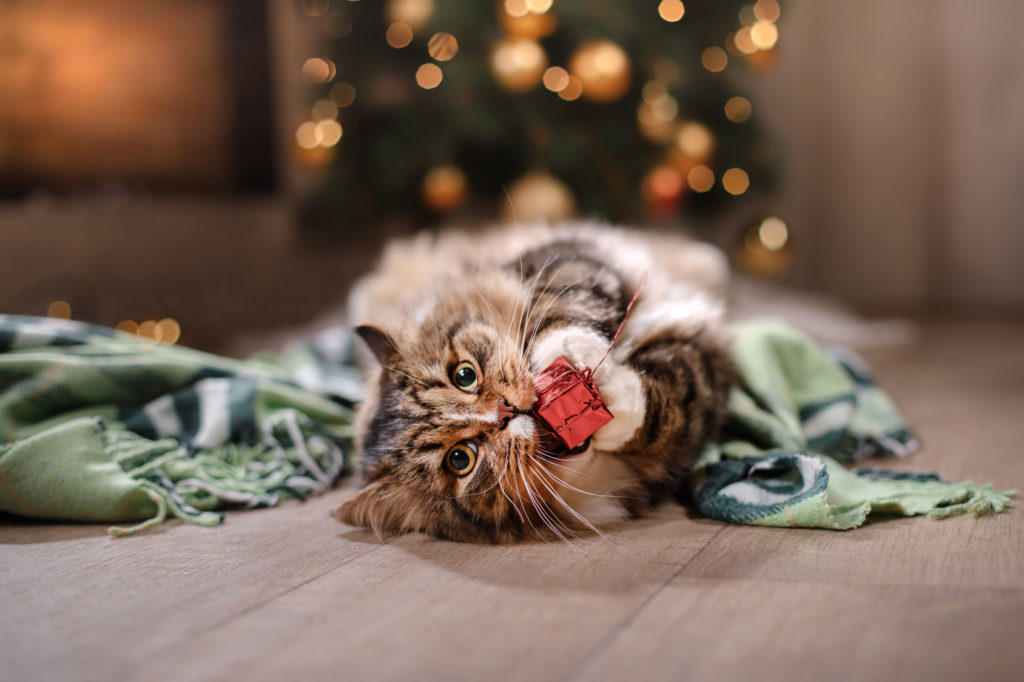 Cat plays with Christmas gift
