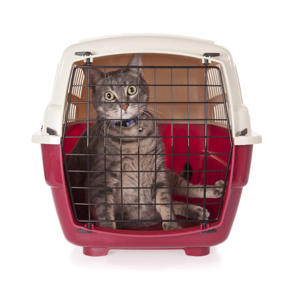 Cat in Cat Carrier