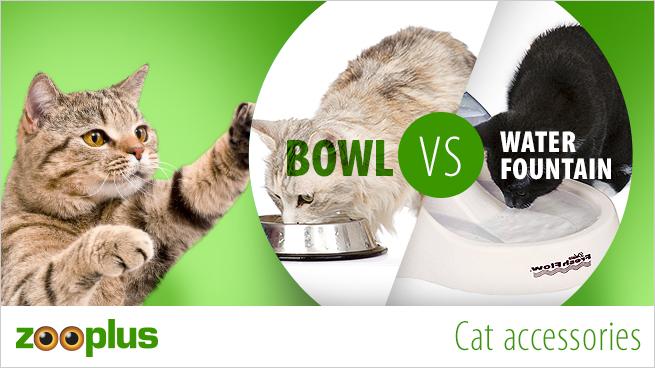Cat bowl VS fountain
