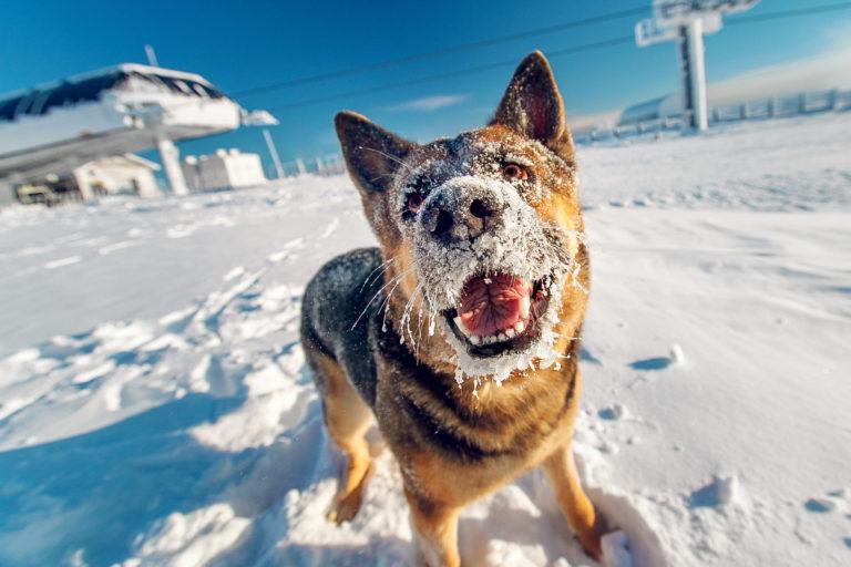 Dog grooming in winter