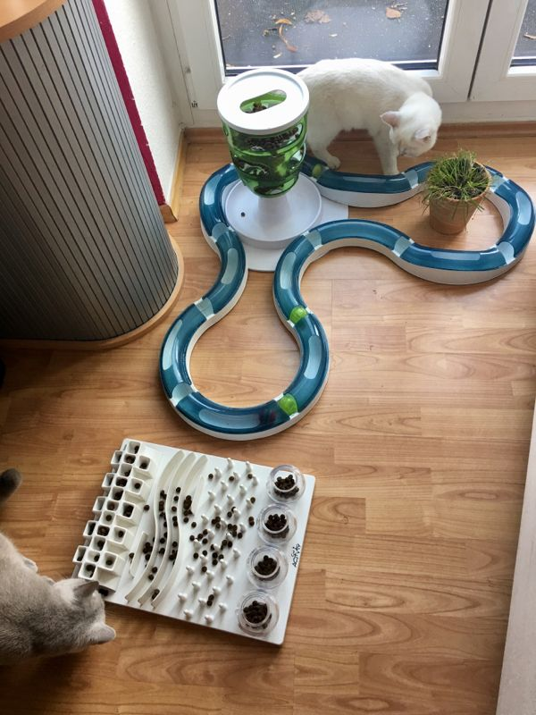 Intelligence toys for cats