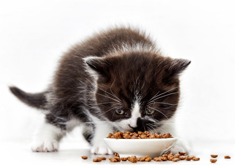 kitten and cat food