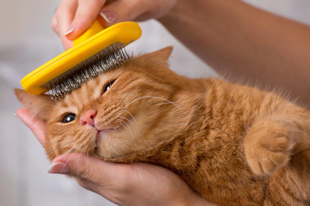 Woman brushing her cat