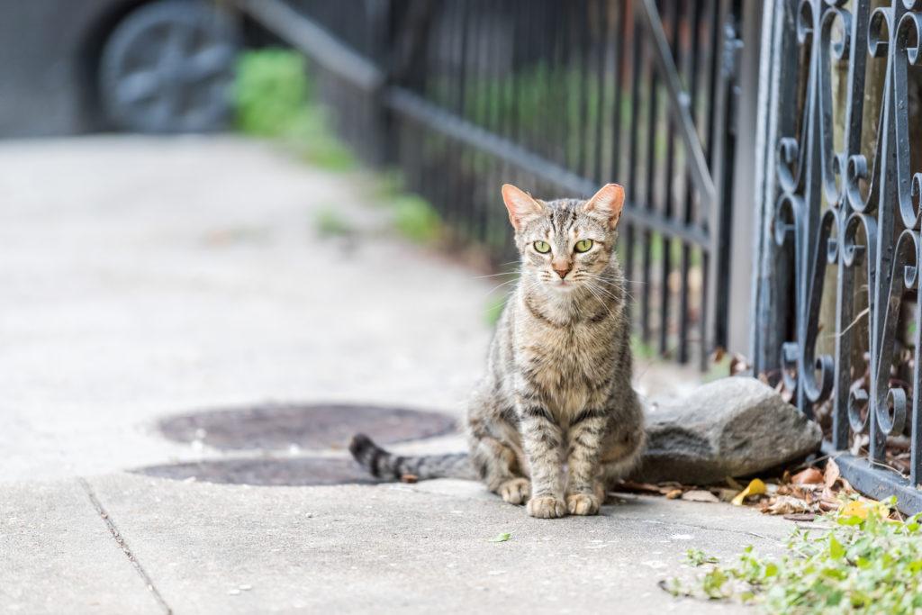 Stray cat - outdoor cat