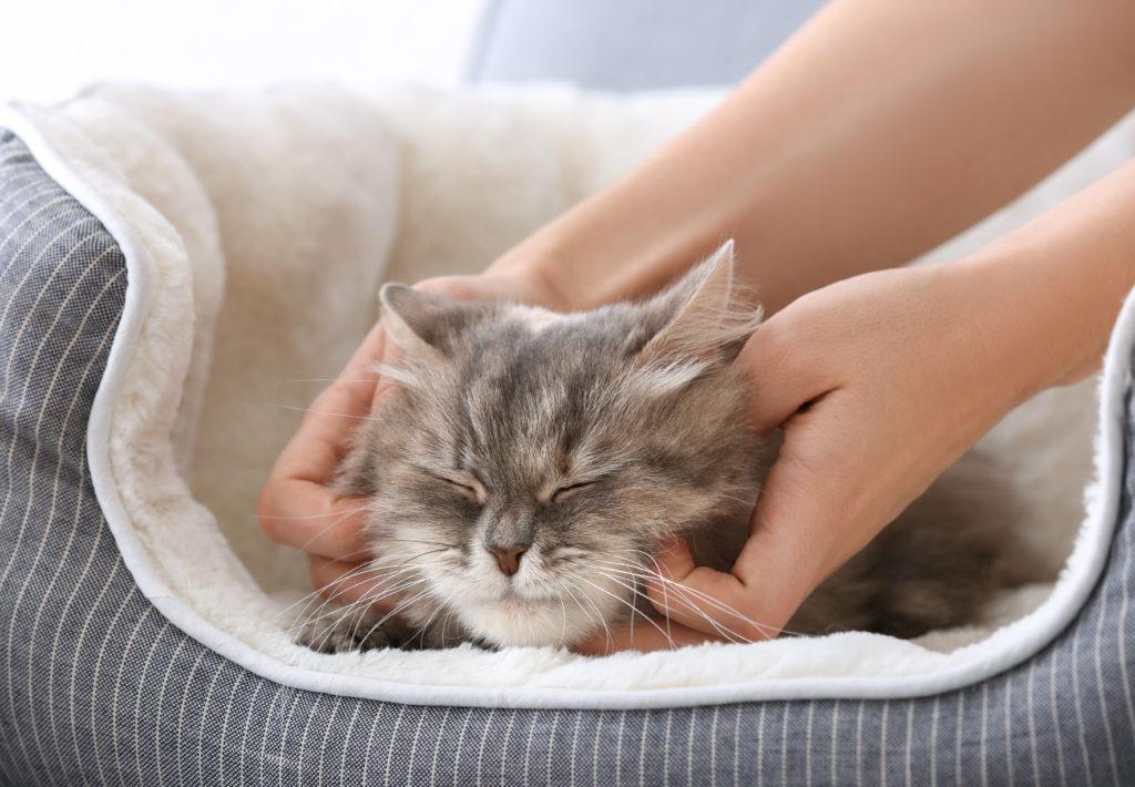 Kitten cuddles purring
