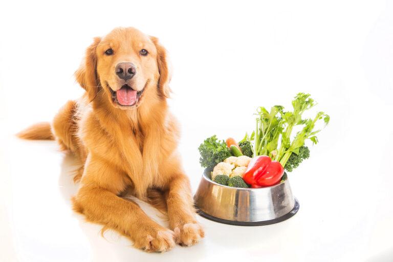 Vegetarian dog food - vegan dog food
