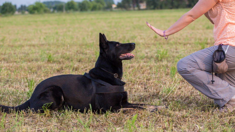 Obedience training lie down dog - IE