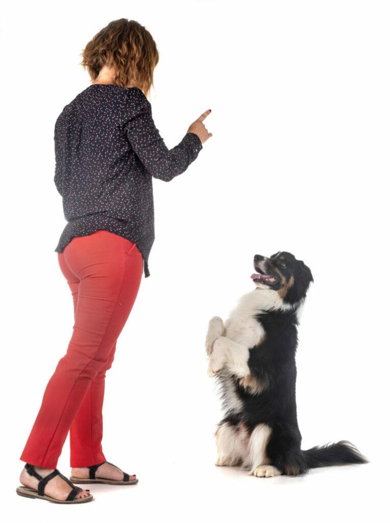 Woman training dog - IE