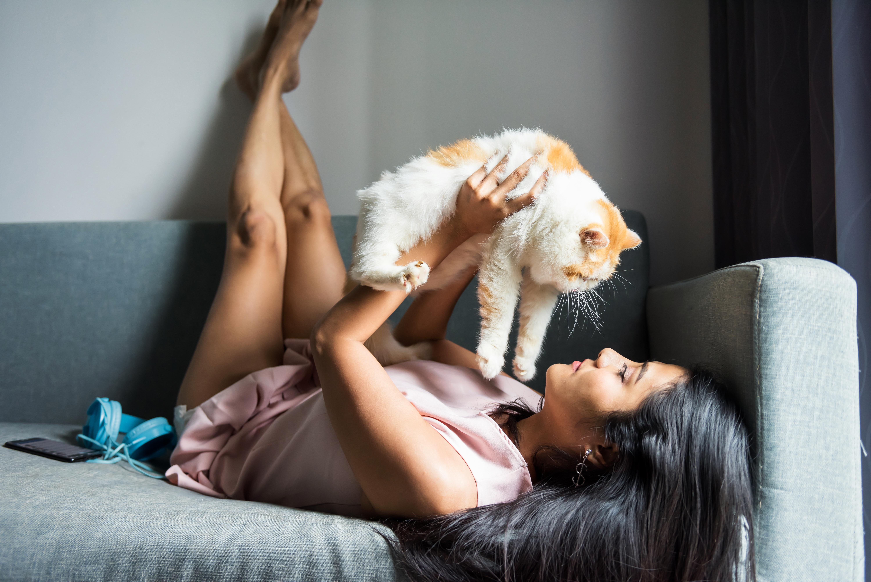 Cat socialisation - cuddles