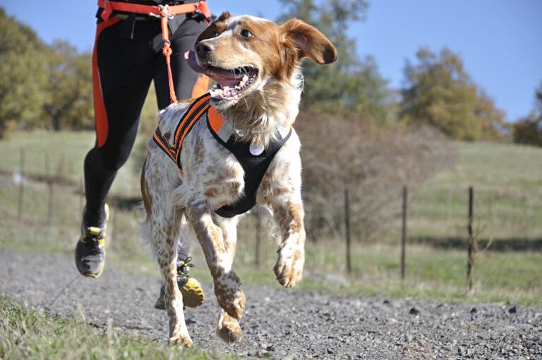 Dog Canicross