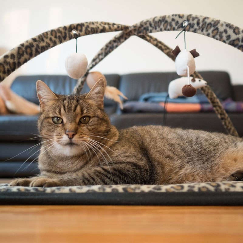 cat toy frame - IE