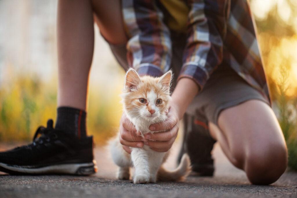 Ginger lost kitten