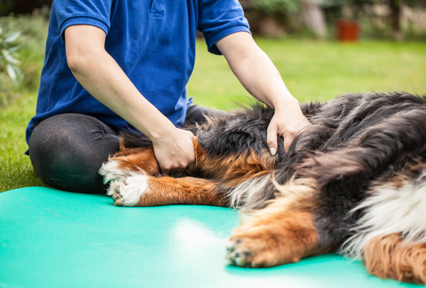 Arthrosis in Dogs - Physiotherapy
