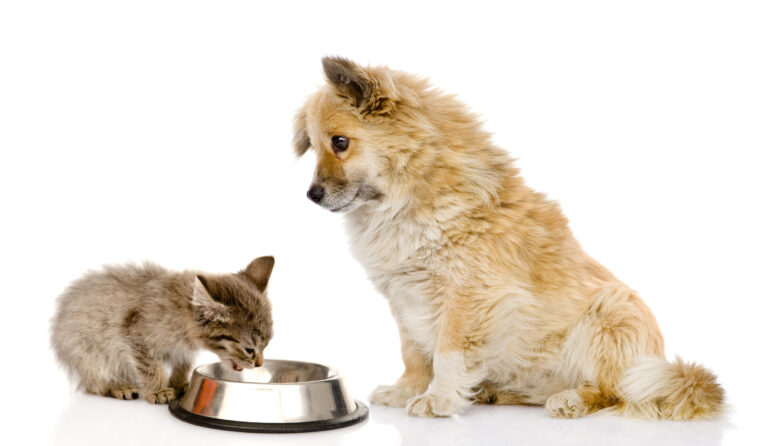 Is cat food safe for dogs?