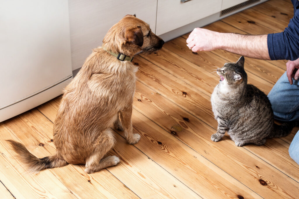 Dog and cat eating food together