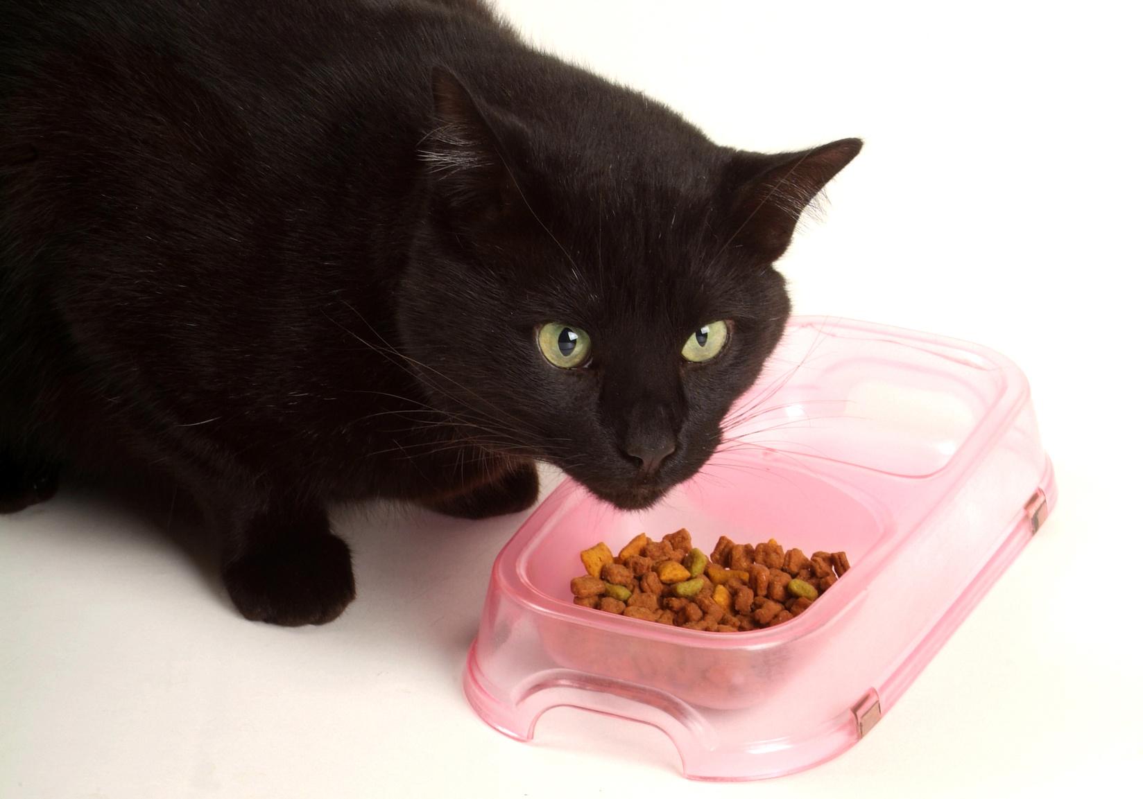 Sensitive Black Cat Eating