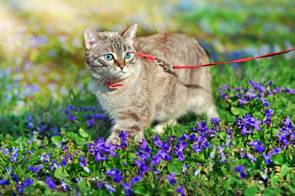 Kitten on the leash