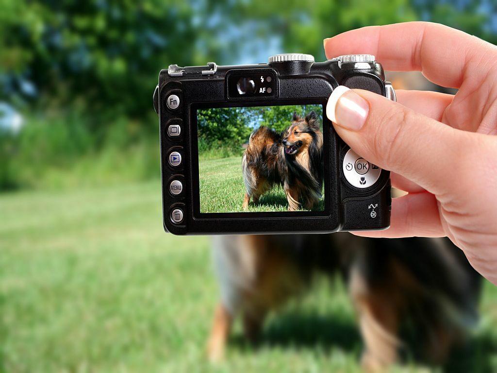 dog photo with digital camera