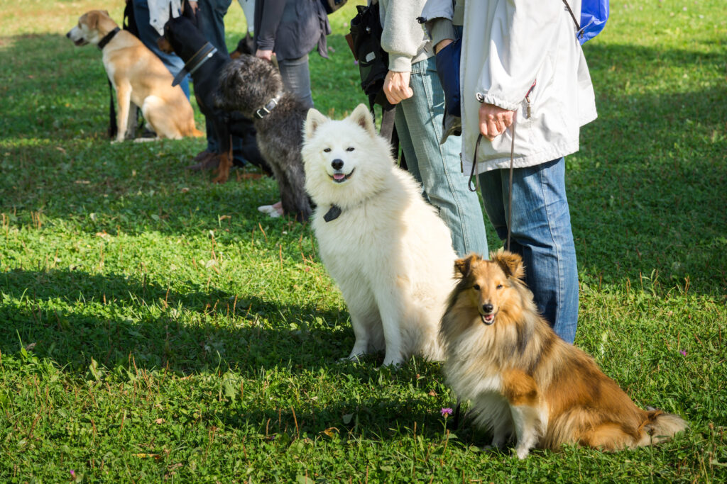 disobedient dogs at dog school