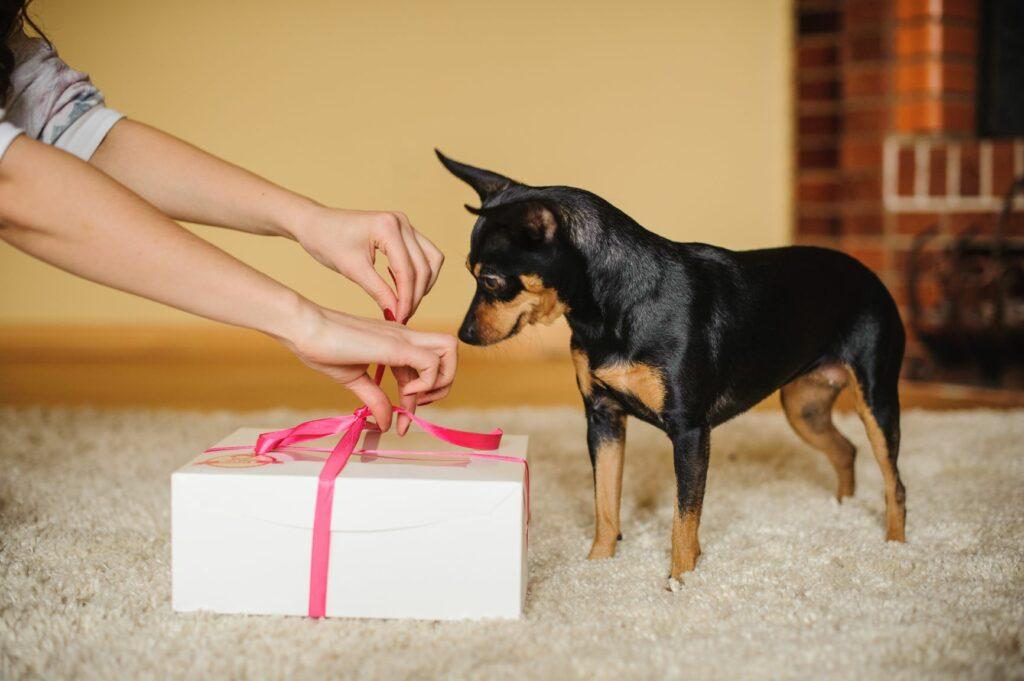 dog valentines day love