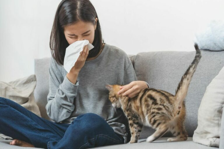 Cat allergy in humans